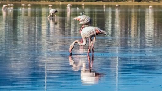 Słone jezioro Larnaca, foto na początek